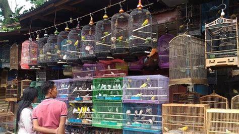 Tempat Kulakan Pakan Burung Jogja pasar burung splendid wisata belanja unik kota malang