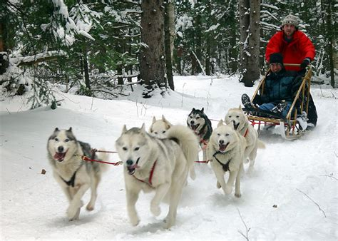 sled dogs wanted sledding equipment equus sims forum