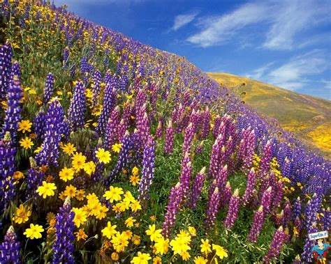 imagini di fiori foto prati di fiori 81 foto in alta definizione hd