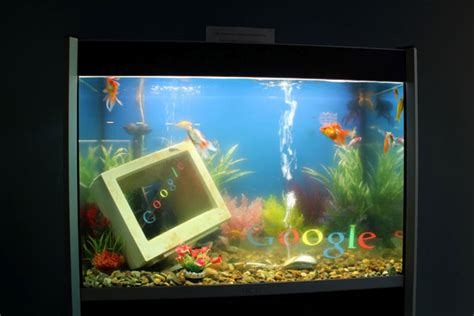 google images fish google fish tank images frompo