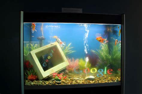 google images fish a google fish tank google dublin office