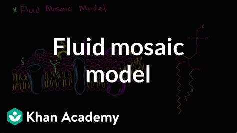 fluid mosaic model  cell membranes biology khan