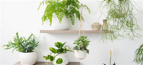 indoor plants  top picks  pots  match