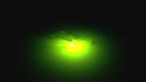 green glow dock light redfish and snook in green glow dock light