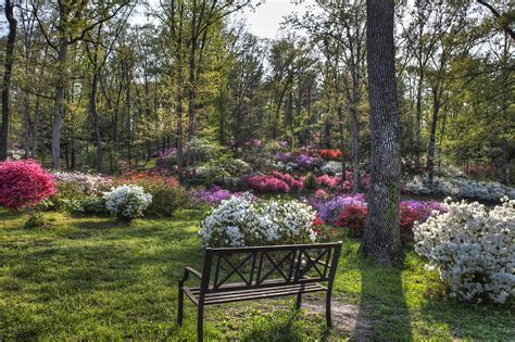 Pincrest Gardens by Pinecrest Gardens Photograph By Larry Braun