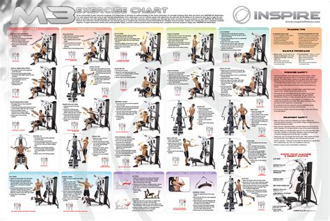 weider home exercise chart images