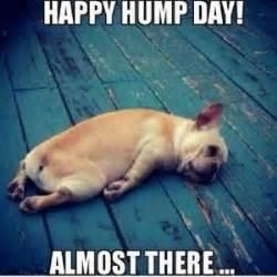 Hump Day Meme Funny - best 25 happy hump day meme ideas on pinterest happy