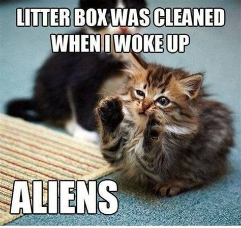 Funny Memes Cats - 38 funny pictures of cats with captions