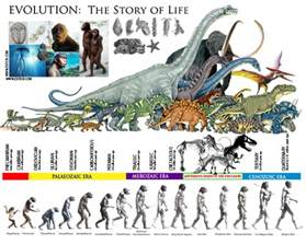 age of eli the future of human book 1 books zsite59 evolution the story of the prehistoric