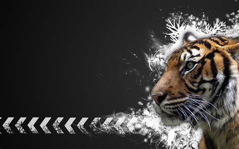 tiger backgrounds wallpapers box tigers computer high definition wallpapers