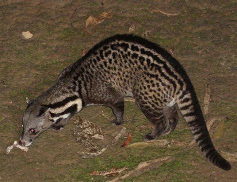 Inidia Cat 23 babou he remembers me lanaaaa gifs