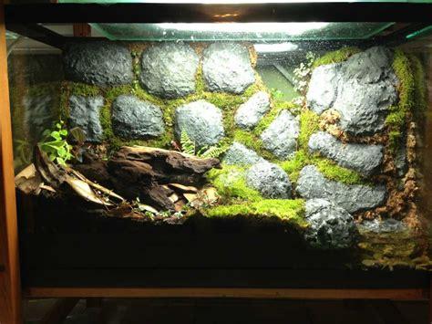 crumbling wall vivarium  frogs reptile terrarium