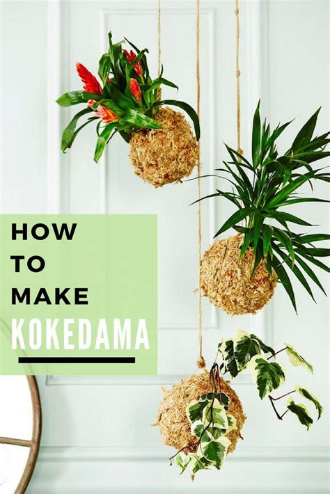 kokedama gardening  plants