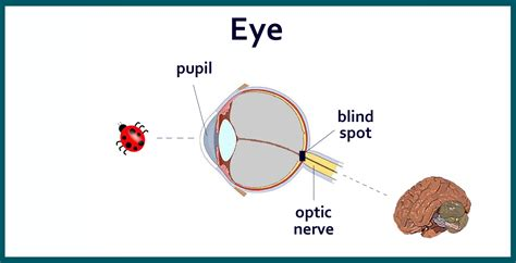Where Is The Blind Spot In Your Eye science reason and logic rule creationism