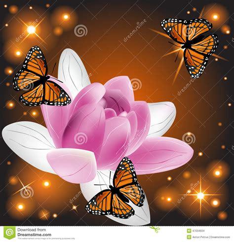 fiori di loto e farfalle bello fiore di loto con le farfalle fotografia stock
