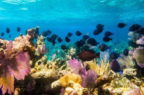 best dive spots in the caribbean 24 best snorkeling spots in the caribbean