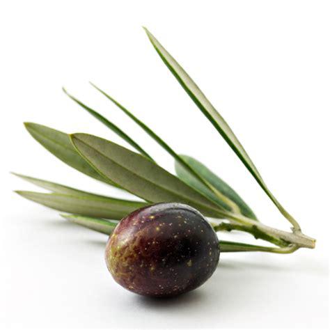 Minyak Zaitun nama buah buahan related keywords nama buah buahan keywords keywordsking