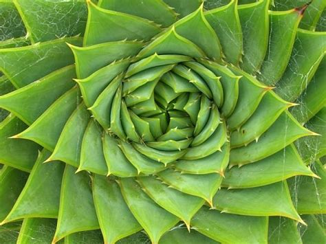 geometric patterns in nature connectivity through form sacred geometry the golden