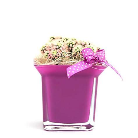 vaso per pianta vasi per piante grasse homehome