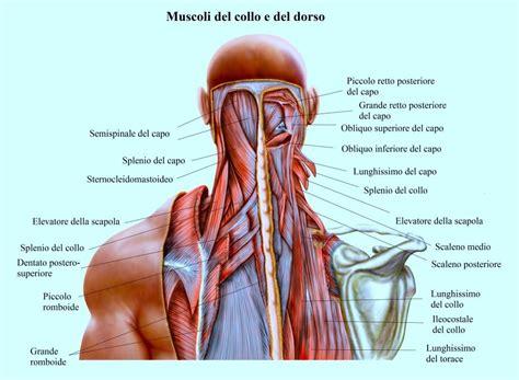 dolori cervicali e mal di testa mal di testa continuo o frequente cause e rimedi naturali
