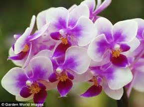 Most Popular Flower by Awesome Orchids How They Have Become Britain S Most