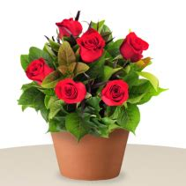 Mukena Bali Roses 7 6 arrangement bali send flowers to bali indonesia same day delivery