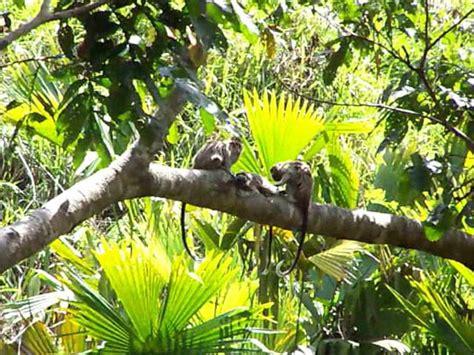 imagenes de animales de la selva garden imagenes de animales de la selva preciosos animales de