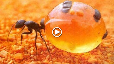 7g Virla 9 unglaubliche insekten