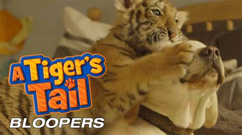 film layar lebar tiger boy a tiger s tail bloopers music watching over you by
