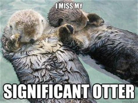Otter Love Meme - significant otter meme quickmeme otters thats right