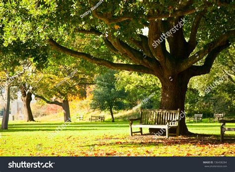 bench under tree 100 london bench games room bench howe london