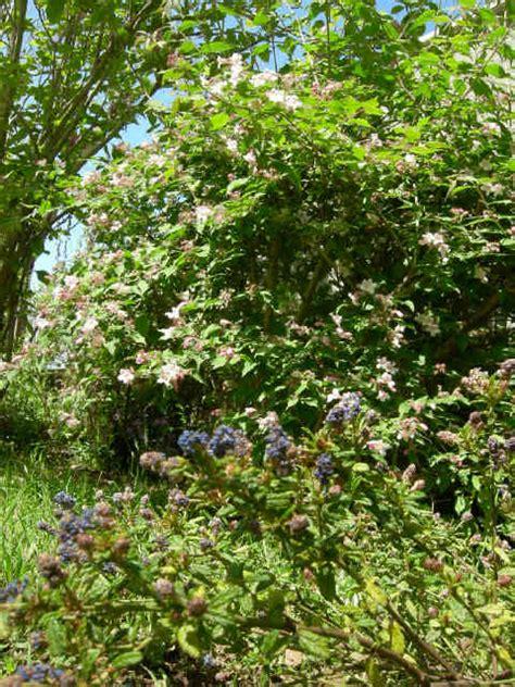 armeni giardini acilia marina piante da giardino roma acilia lavinio erbe