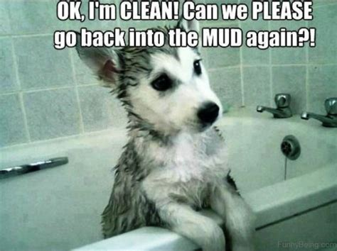Clean Animal Memes - 50 funniest dog memes of all time