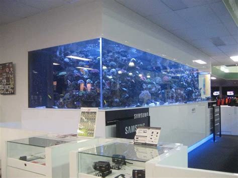 wall aquarium large size saltwater wall mounted aquarium in the office