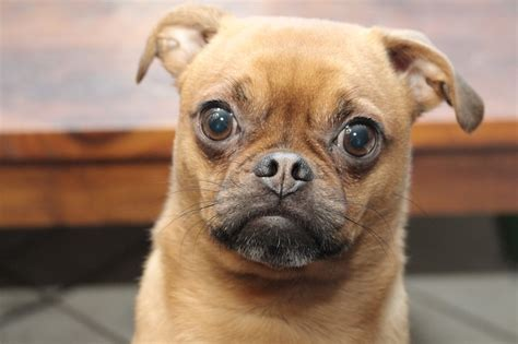 why do dogs stare at you why do dogs stare at walls it s a doggie thing