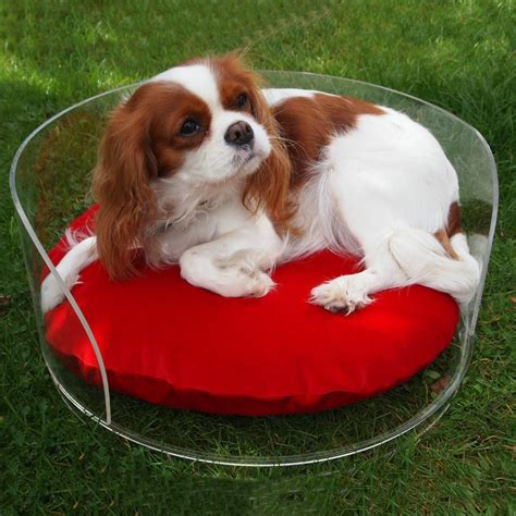 cute dog bed cute dog beds dog bed elevated raised pet cots durable pvc