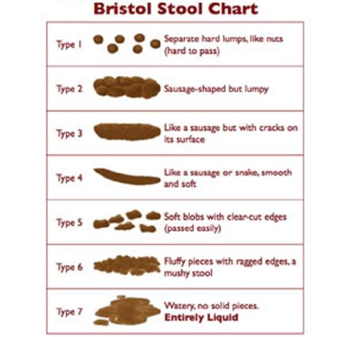 Which Doctor To See For Blood In Stool by Bristol Stool Chart Freshener Novelty By Pedrows Emporium