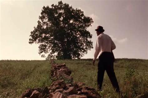 shawshank redemption tree the shawshank redemption tree has fallen down the