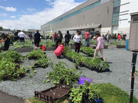 Community Vegetable Gardens Urban Seedling Community Vegetable Gardens