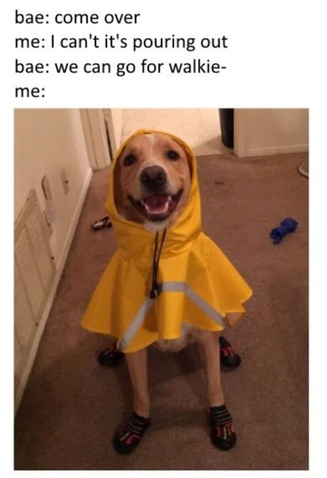 Much Dog Meme - 100 dog memes that prove the internet is not all made out
