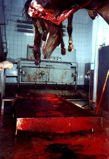 slaughterhouse glass house 88 best images about if only the slaughter house had glass walls on pinterest a cow animals