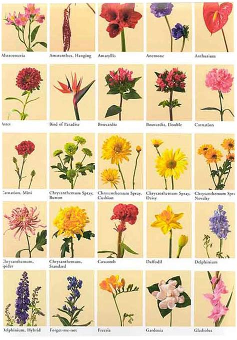 list of flowers flower names weneedfun