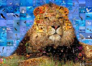 Photo collage quot king of animals quot