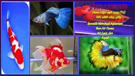 Jual Rak Aquarium Bekasi 0896 2481 9055 jual aquarium bekasi jual aquarium aquascape