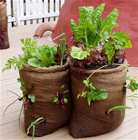 container gardening pdf garden plants that grow well together landscaping ground
