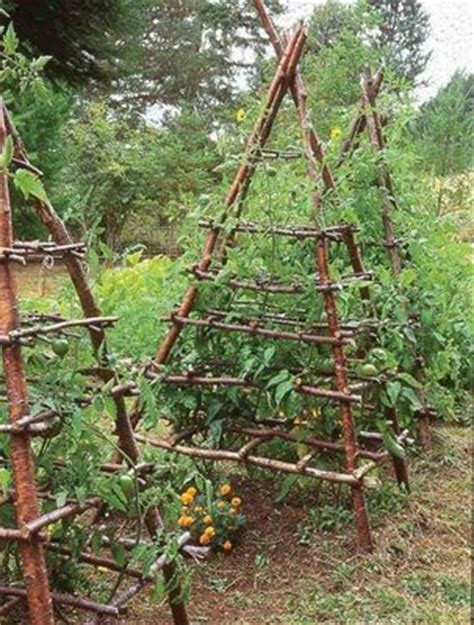 climbing tomato plants teepee trellis gt for tomatoes or other climbing plants