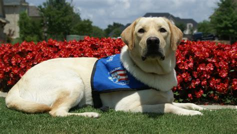 what do service dogs do why you should never do these things to any service urdogs