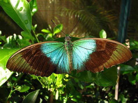 casa delle farfalle casa delle farfalle co a cervia