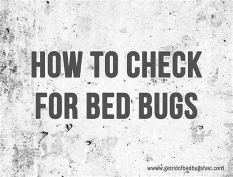 how to check for bed bugs 17 best images about bed bugs on pinterest nymphs dust