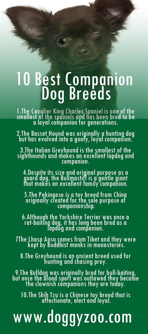 companion breeds 10 best companion breeds doggyzoo comdoggyzoo